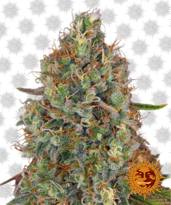 Sweet-Tooth-Auto