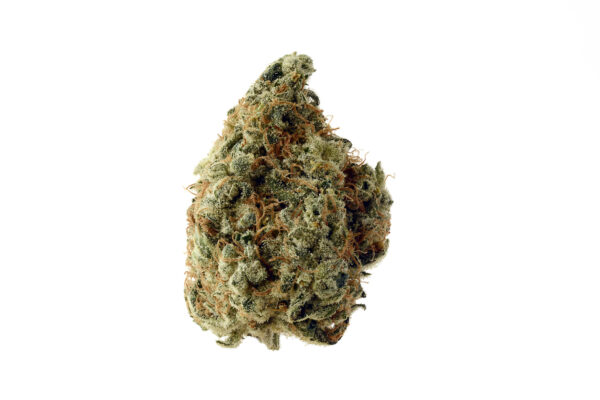 White-Choco-grown-from-Amsterdam-Genetic-Seeds