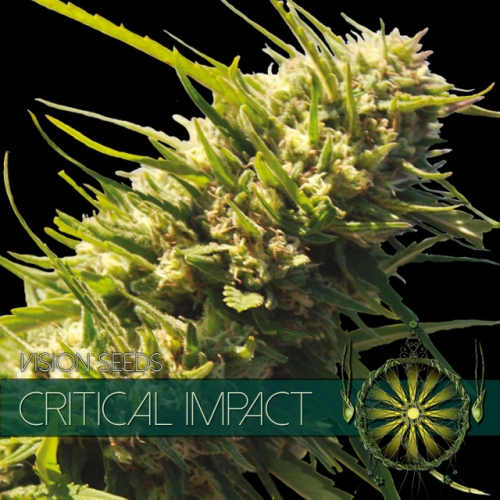 vision-seeds-critical-impact-500×500