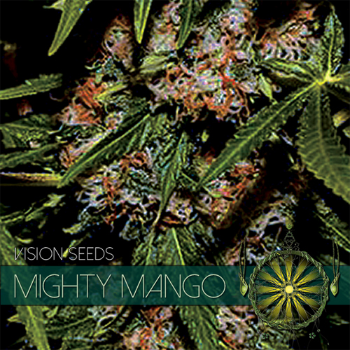 vision-seeds-mighty-mango500x500