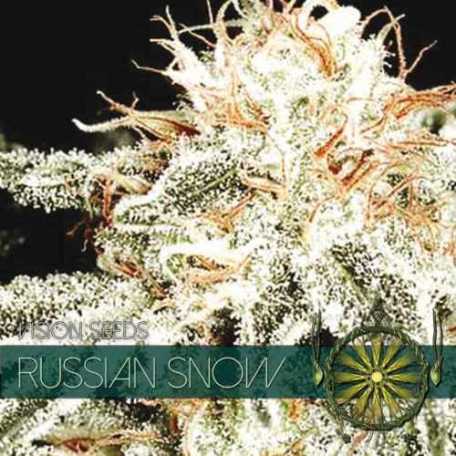 vision-seeds-russian-snow-500×500